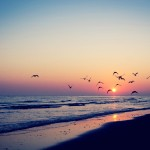 bird-silhouettes-in-the-beach-sunset-15306